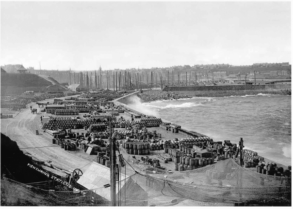 Fishcuring Stations in Wick in the 1890s